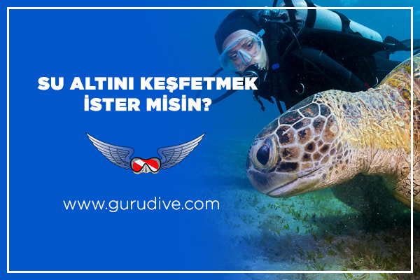 Guru Dive